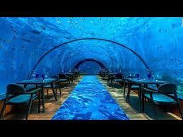 underwater restaurant disney world. Exellent Disney Underwater Restaurant Disney World Perfect Disney Coral Reef Review Epcot  Tourist Blog Underwater Restaurant With World