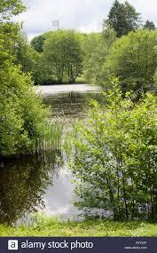 france saint brisson parc naturel regional du morvan morvan regional natural park trees surrounding lake in grounds of maison du parc