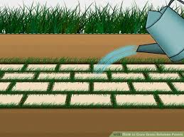 image titled grow grass between pavers step 6