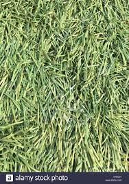 fake grass texture. Fake Grass Texture. Texture
