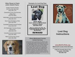Lost Dog Flyer Template Word Wonderful Of Lost Dog Flyer Template Word Missing Poster Flyer 9