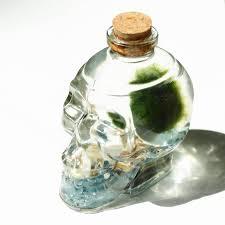 blue marimo moss ball terrarium in a skull wine bottle