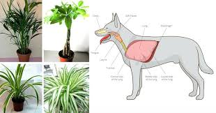 house plants safe for cats being indoors non poisonous houseplants for cats and dogs