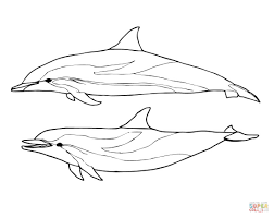 1101x877 two striped dolphins coloring page free printable coloring pages