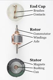 disected motor