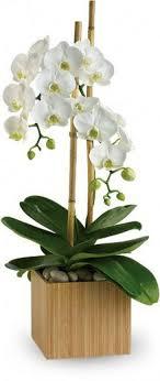 white phalaenopsis orchid funeral flowers las vegas