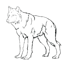 Best Of Coloring Pages Of Wolves And Free Wolf Coloring Pages