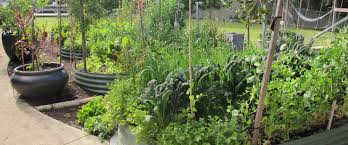 Small Picture Your Patch Organic Gardening Design Service Perth WA
