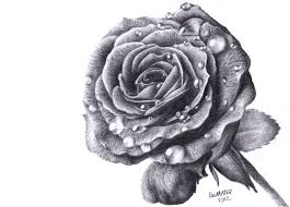 Small Picture Rose Drawings In Pencil pencil drawings of babies erwinnavyanto