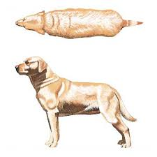 Is Your Dog Overweight And Needs To Exercise