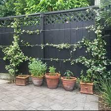 steel wire rope green wall trellis