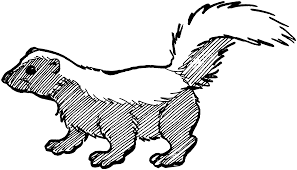 Free Skunk Coloring Pages 151387 Skunk Coloring Page Art