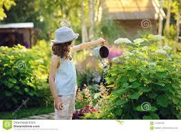 happy child playing little gardener and watering hydrangea bush in sunny summer garden little helper concept kids spending summer vacation in countryside