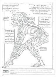 Human Body Coloring Pages Anatomy Human Body Coloring Color Online