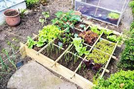 beginner gardening. container beginner gardening