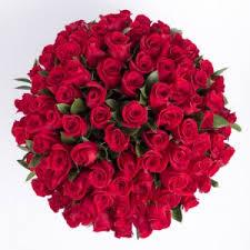 75 roses enchan