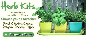 indoor herb garden kit. Culinary Herb Garden Kit Kitchen For Indoor Awesome