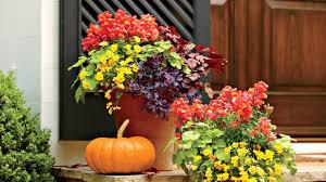fall garden flowers. Fall Garden Flowers