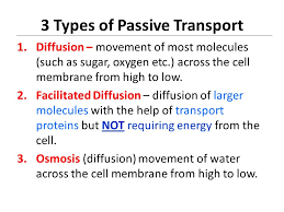 3 Types Of Passive Transport The Cell Membrane Cellular Transport Function Of Cell