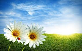 spring wallpapers hd spring wallpaper background picture 06 jpg