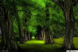 Groene Bomen In Het Park Hd Wallpaper Downloaden