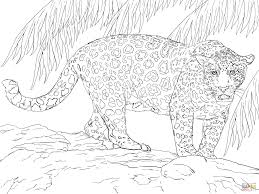 Small Picture Great Jaguar coloring page Free Printable Coloring Pages