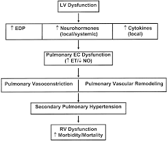 Pathophysiology Of Chf Secondary Pulmonary Hypertension In Chronic Heart Failure Circulation