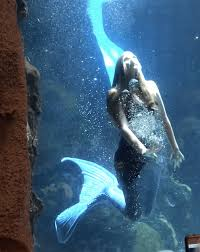 See real mermaids at the Downtown Aquarium in Denver Colorado
