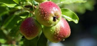 3 Things To Know About Hardiness Zones  Stark Brou0027sFruit Trees For North Florida