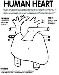 Small Picture Heart Diagram Kids Coloring Page 3 Human Heart Coloring Sheet