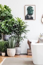 Plant Interior Design Simple Decorating Design