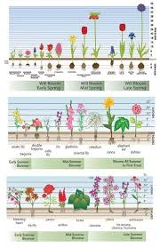 How To Plant Flower Bulbs Quora