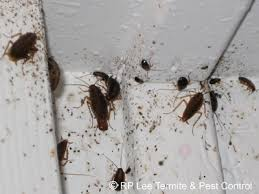 amusing small roaches in kitchen also luxury home interior