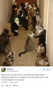 Funny cat pictures Cat Videos Funny Cat Tweets Bored Panda 33 Funny Tweets About Cats Bored Panda