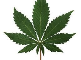 marijuana legalization makes sense for na