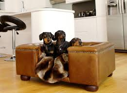 image of luxury dog lounge chair