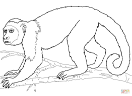 Small Picture Coloring Pages Animals Squirrel Monkey Coloring Page Monkey