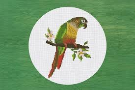 Cross Stitch Pattern Green Cheeked Conure Instant Download