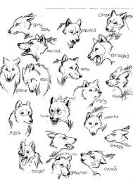 Animaux Dessin Pierre Et Le Loup Resultats Daol Image Search Dessin Pierre Et Le Loup A ImprimerL