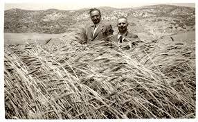 Risultati immagini per la raccolta del grano prima dell'arrivo delle macchine