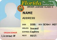 Template Drivers Florida License Ivoiregion -