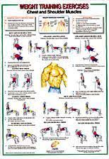 Chest Workout Chart Step By Step Yukon Fitness Chest Shoulder Muscles
