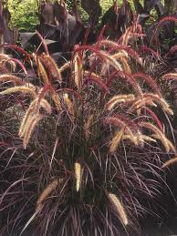 Diy Garden Projects Types Of Ornamental Grasses Diy Garden Projects Garden Projects