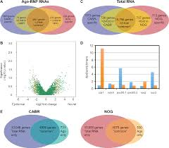 Genesis 1 And 2 Venn Diagram Figure 2 From Micrornas And Ectodermal Specification I