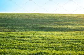 grass field background. Background Photography Of Bright Lush Grass Field Under Blue Sunny Sky. Outdoor Countryside Meadow Nature. Rural Landscape.