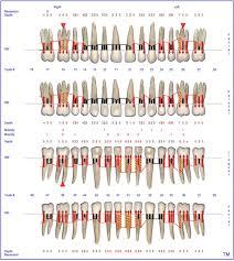 Florida Probe Periodontal Chart At Baseline Periodontal