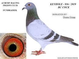 iPigeon.com - Racing Pigeon Auction