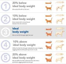 Weight Body Condition Score Obesity Overweight Pet Fat