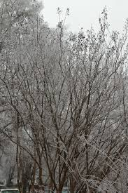 Image result for natchez trace ice storm feb 2021