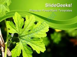 Green Plant Nature Powerpoint Templates And Powerpoint Backgrounds ...